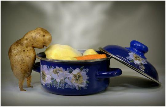 Картошка заглядывает в кастрюльку с варёной картошкой