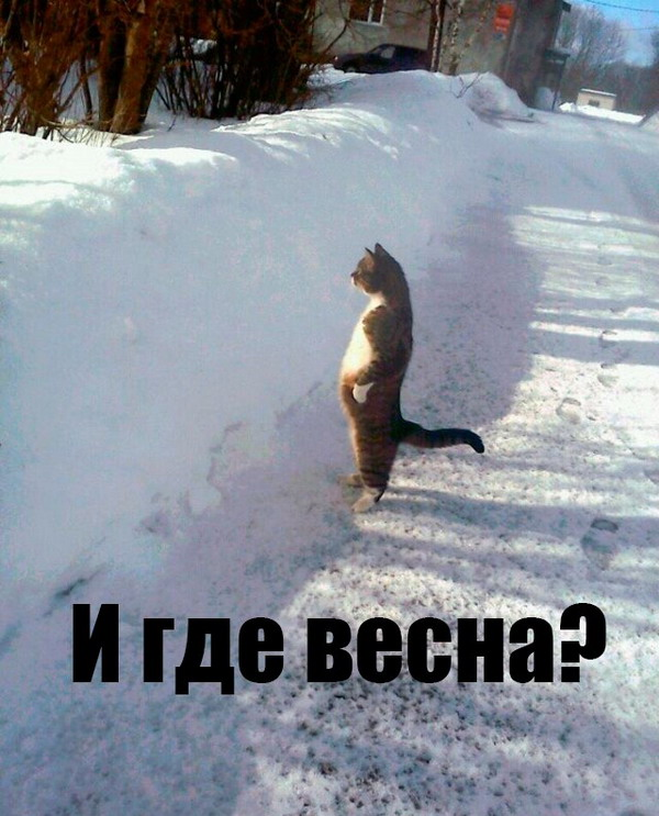 Удивленный долгой зимой котэ